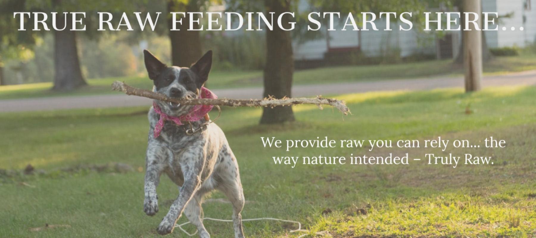 true-raw-feeding-starts-here